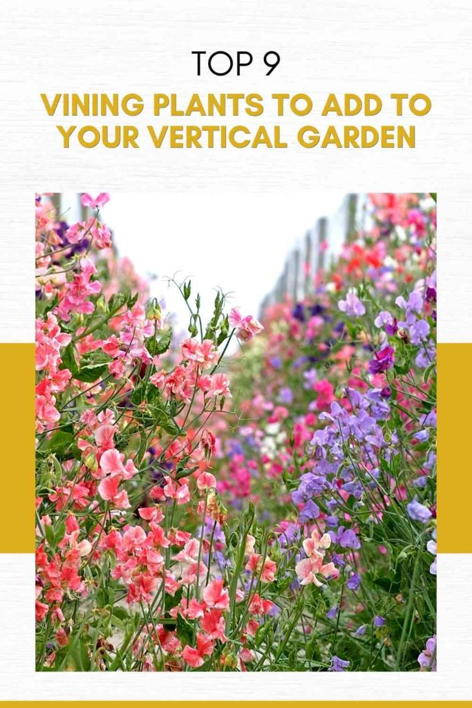 Top 9 Best Vining Plants to Add to Your Vertical Garden (Expert Recommendations)