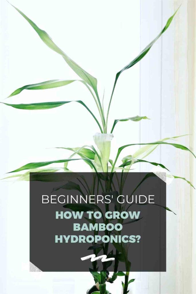 How to Grow Bamboo Hydroponics? - A Beginners' Guide!