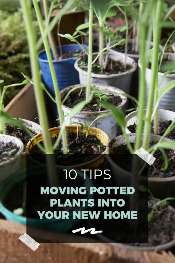 10 Tips for Moving Potted Plants into Your New Home