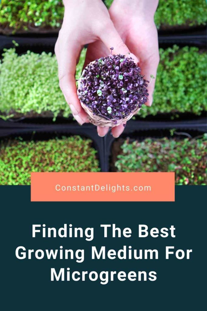 Finding The Best Growing Medium For Microgreens