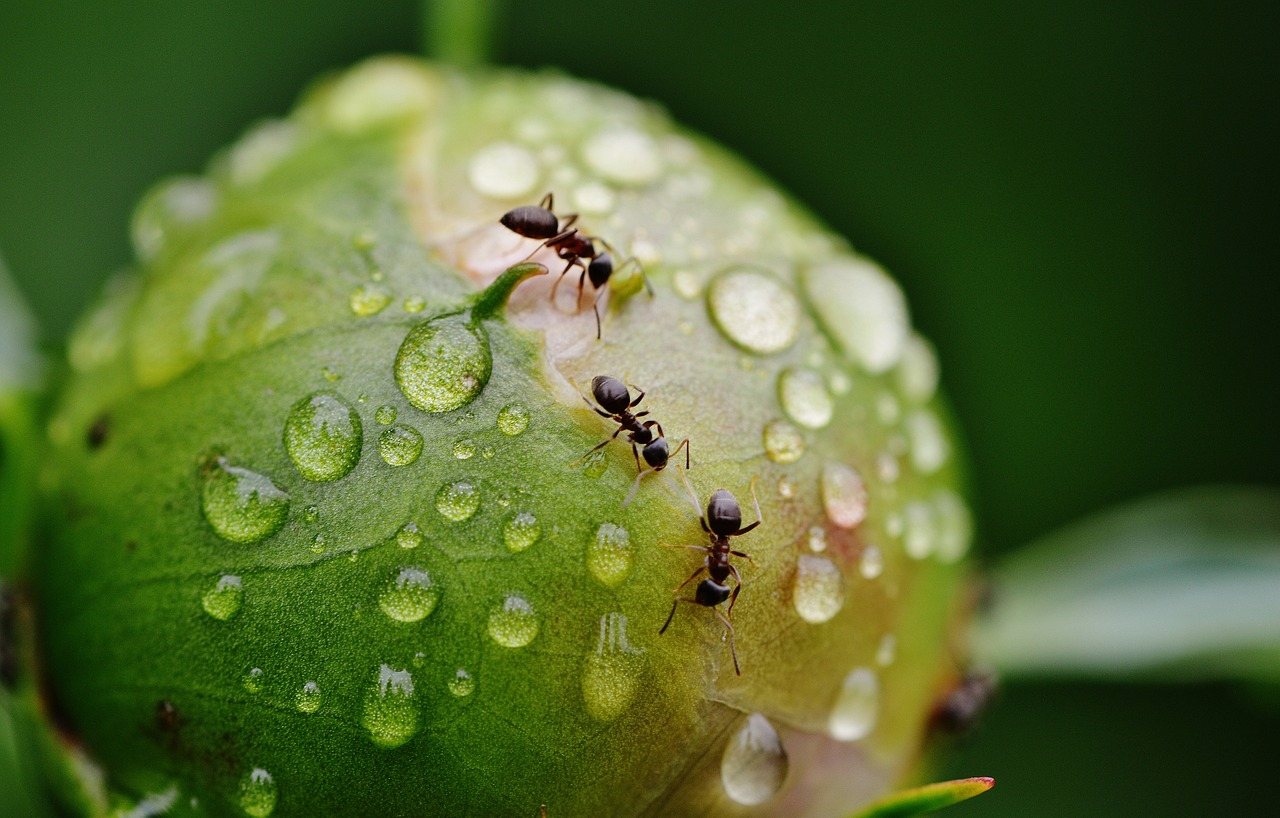 Best Carpenter Ant Killer: Find A Solution To Your Infested House