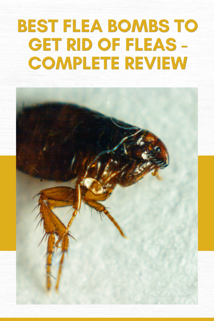 Best Flea Bombs To Get Rid Of Fleas - Complete Review