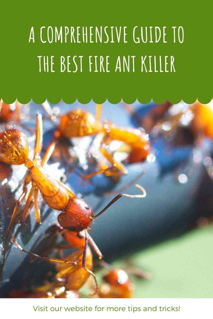 A Comprehensive Guide To The Best Fire Ant Killer