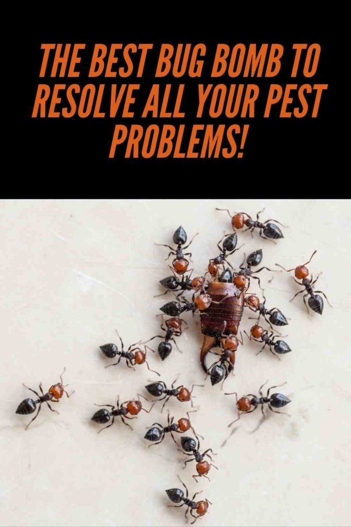 The Best Bug Bomb To Resolve All Your Pest Problems!