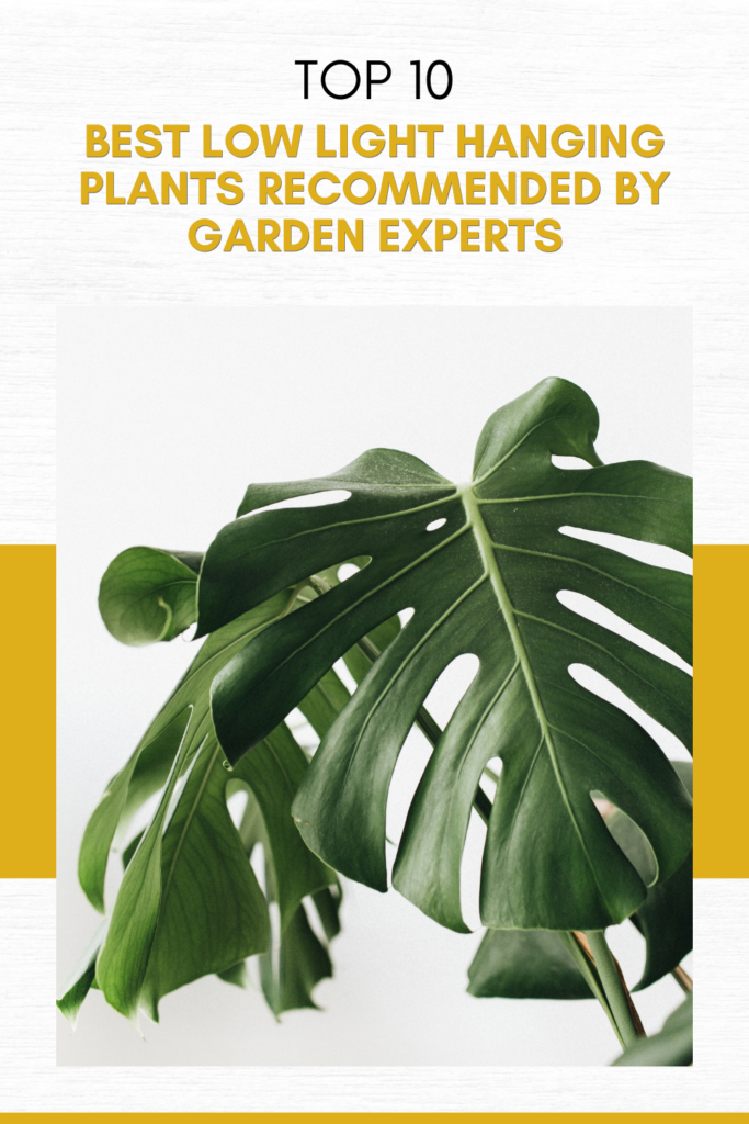 Top 10 Best Low Light Hanging Plants Recommended by Garden Experts