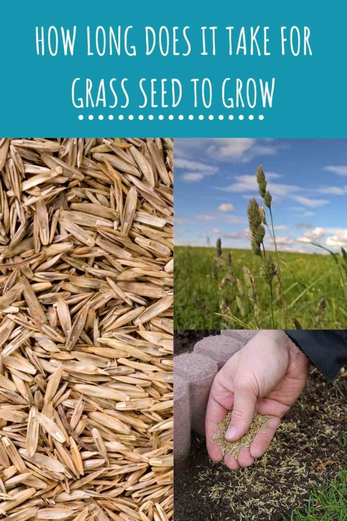 How Long Does It Take For Grass Seed To Grow