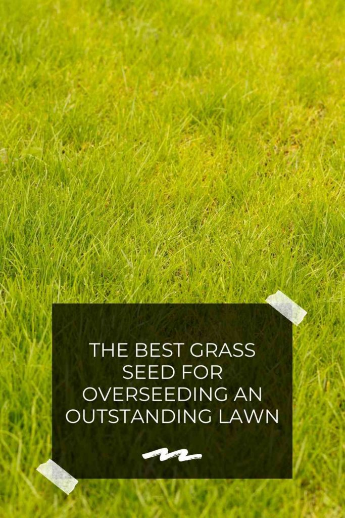 The Best Grass Seed For Overseeding An Outstanding Lawn