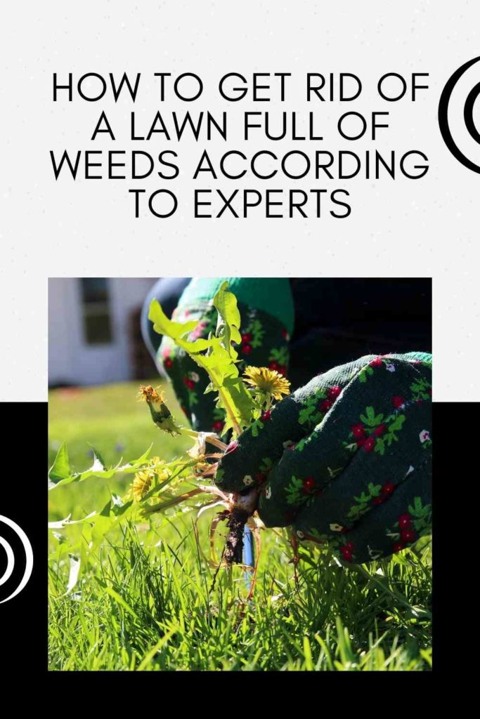 How To Get Rid Of A Lawn Full Of Weeds According To Experts