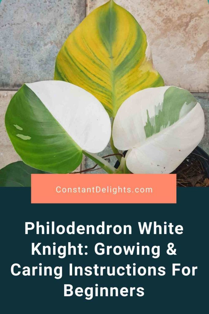 Philodendron White Knight: Growing & Caring Instructions For Beginners