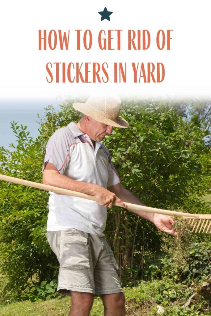 How To Get Rid Of Stickers In Yard (Instructions In Detail)