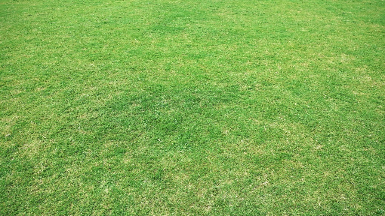 Best Grass Seed For Clay Soil – Review With Buying Guide