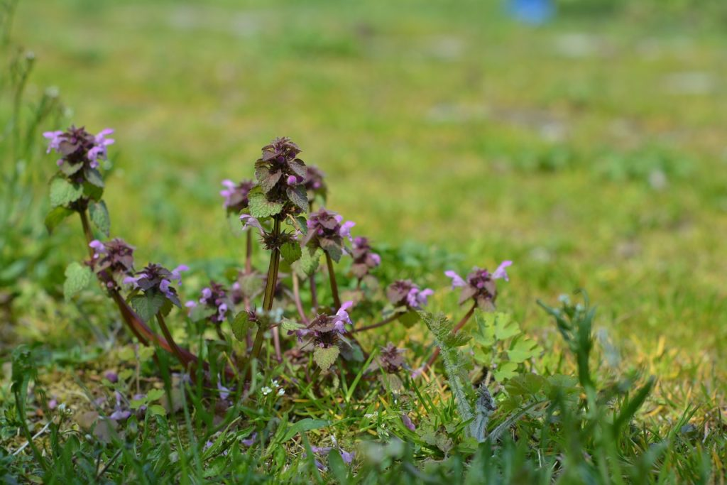 Top 5 Best Weed Killer That Won't Kill Flowers - Buying Guide