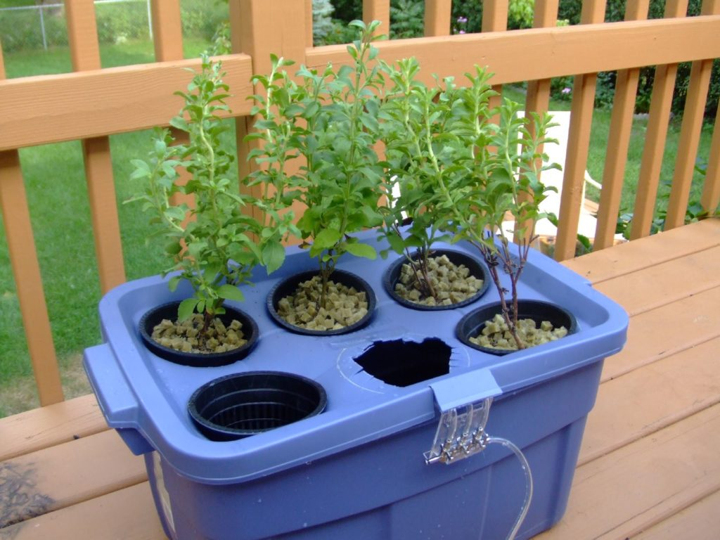 How To Manage Outdoor Hydroponics For Your Vegetable Garden