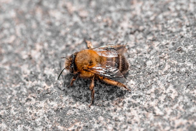 How To Get Rid Of Ground Bees (Effective Pest Control Guide)