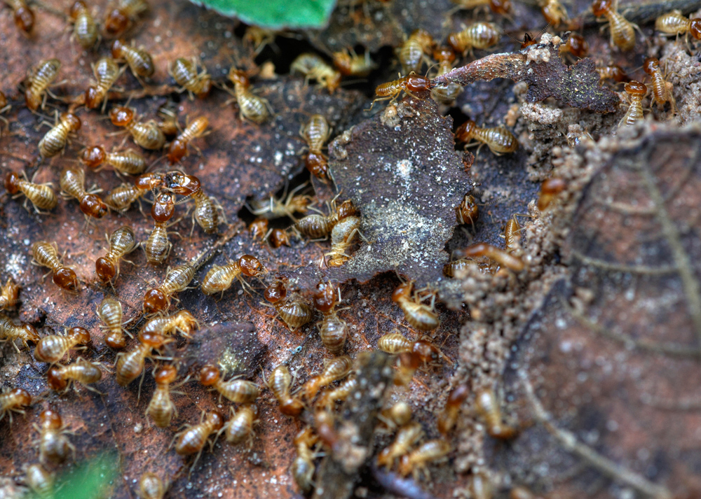5 Best Termite Killer Reviews And Termiticide Buying Guide
